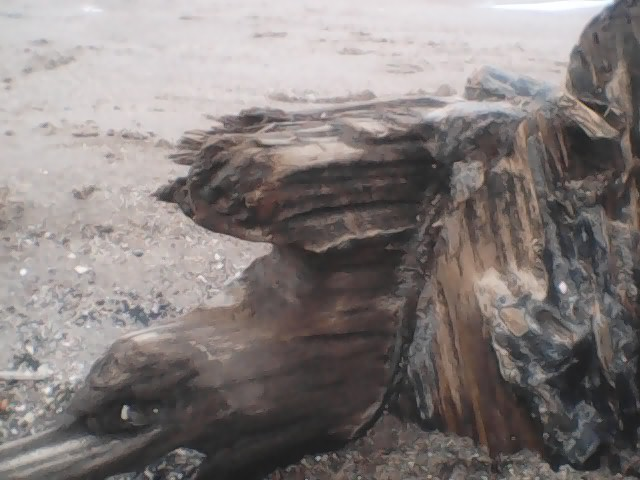 Detail photograph of brown fragment of ship's timber in the foreground, with lighter-coloured sand in the background.