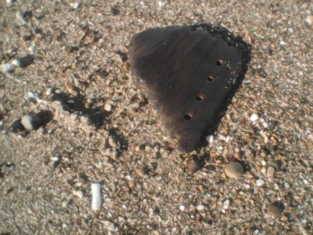 Fan shaped fragment of brown wood with holes in it, on a background of lighter-coloured brown sand with shells and pebbles
