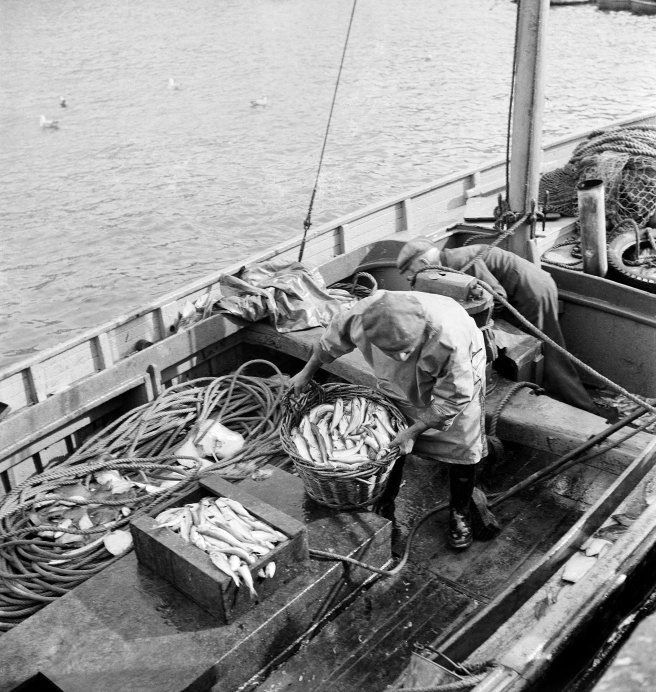 Black and white photograph of the interior of a boat, with a fisherman landing baskets of fish.