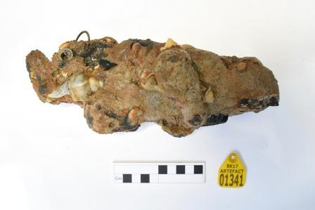 Irregular lump of concretion with shells and other material embedded, scale rule and yellow number tag at bottom