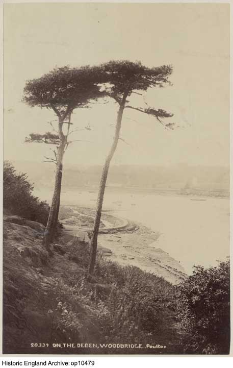 Historic sepia photograph of two pine tree tops looking down below to a river scene, with the adjoining bank visible below the trees and the opposite bank in the distance, across the middle of the image.